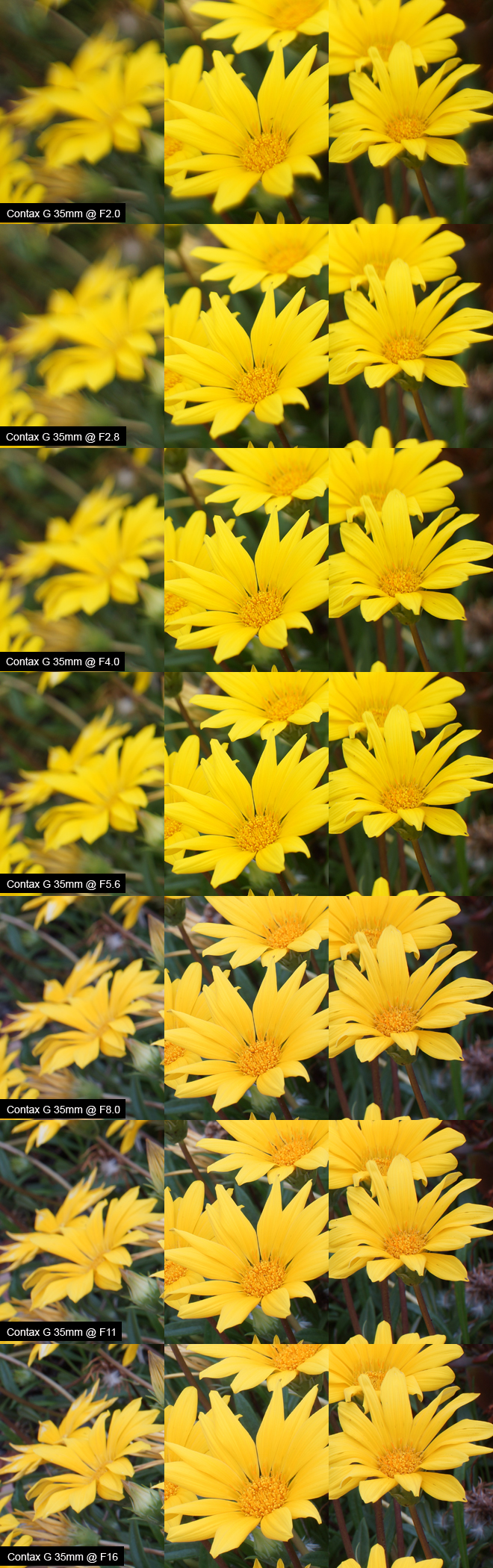 "Contax G 35mm ""Setup Two: Close Up"" Review Results"
