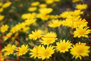 Sony NEX-7 w/ Contax G 35mm F2.0
